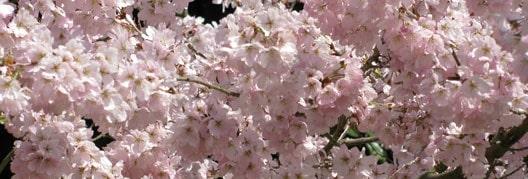 四季折々の花々サイトの表紙フラッシュ